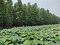 李中水上森林公园20190714 05.jpg