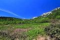栂池自然園 - panoramio (11).jpg