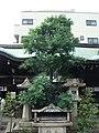 梛神社の梛の木.jpg
