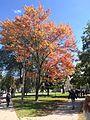 皇后的枫树 - panoramio.jpg