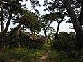 荒崎稲荷神社への道 Path to Arasaki Inari Shrine - panoramio.jpg
