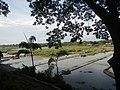 01940jfLandscape Bustos Dam Resort Angat River Tibagan Bulacanfvf 07.jpg