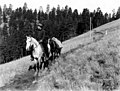 077974 Ranger & Horses, Davis Cr Canyon, Wallowa NF, OR 1908 (22012876246).jpg