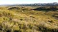11 - 009a - QUAIL SPRINGS CUTOFF ROAD, carrizo plain national monument, san luis obispo co, ca -02a (26159399572).jpg
