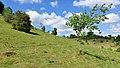 170618-01 Wacholderheide unter Sommerhimmel.jpg