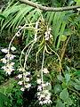 2012 kveten botanicka zahrada 083.jpg