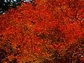 2014-11-24 Sekiganji 石龕寺 DSCF4731.jpg