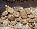 2014.01-413-0847ap Oysternut(Telfairia pedata(Cucurbitaceae) Soni(West Usambara Mts),TZ fri24jan2014-1148h.jpg