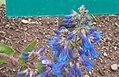 2015.05.19 14.20.54 DSCN2393a - Flickr - andrey zharkikh.jpg