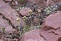 2015.06.27 14.40.59 IMG 2862 - Flickr - andrey zharkikh.jpg