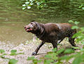 2015 08 19 050 Hund Wallberg.jpg