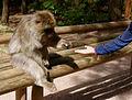 2016-04-21 13-56-06 montagne-des-singes.jpg