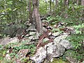 2017-08-10 16 16 15 Rocky forest floor adjacent to the Gerry Connolly Cross County Trail between Twin Branches Road and the Washington and Old Dominion Trail in Reston, Fairfax County, Virginia.jpg