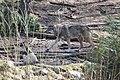 2018-04-04 Wildpark Güstrow 20.jpg