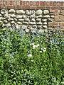 2018-05-11 Wild flowers, Roughton.JPG