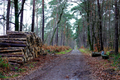 2018-12-22-December-watercolors.-Hike-to-the-Ratingen-forest. File-13.png