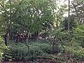 5 Chome Jindaiji Motomachi, Chōfu-shi, Tōkyō-to 182-0017, Japan - panoramio (14).jpg