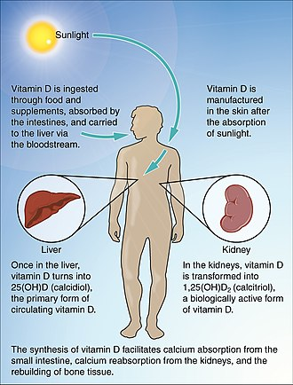 Vitamin D deficiency - Normal Synthesis of Vitamin D