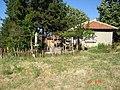 7957 Verentsi, Bulgaria - panoramio - fari62.jpg