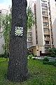 80-361-5030 Kyiv Kyrponosa Oak SAM 0182.jpg