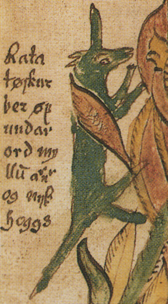 Ratatoskr - A 17th century Icelandic manuscript depicting Ratatoskr. Although unexplained in the manuscript and not otherwise attested, in this image Ratatoskr bears a horn or tusk.