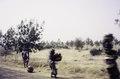 ASC Leiden - van Achterberg Collection - 01 - 55 - Trois femmes avec des écailles sur le sol et la tête sur la route entre Agadez et Tahoua - Agadez - Tahoua, Niger, novembre 1990 - janvier 1991.tif