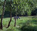 A Horse In A Summer Landscape (6582239037).jpg
