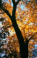 A TREE GROWS IN NEW MEXICO - panoramio.jpg