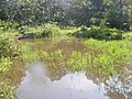 A Vegetated Pond.jpg