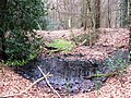 A Woodland Pond in West Wood - geograph.org.uk - 1201309.jpg