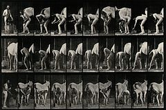 A man shoeing a horse. Photogravure after Eadweard Muybridge Wellcome V0048737.jpg