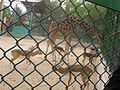 A view from kuwait zoo by irvin calicut (111).JPG