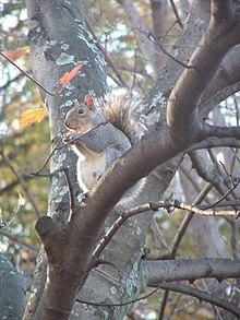 A well-fed squirrel.jpg