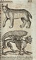 Above, a lynx; below, a beast with a feathery tail carrying Wellcome V0021200.jpg