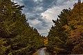Acadia Park Loop Road (29774230964).jpg