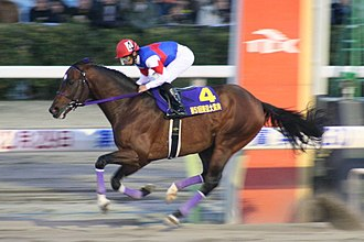 Center of balance (horse) - A forward position allows a race horse jockey to stay over the galloping horse's center of gravity so the horse can reach the maximum possible speed