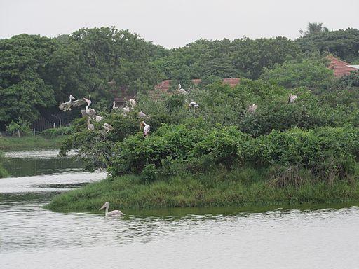 Adyar Park/Tholkappiya Poonga: Chennai