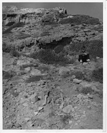 Aetokremnos upon its discovery, 1960, with fossil remains in the foreground