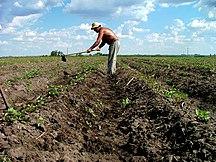 Uruguay-Economia-Agricultura en Uruguay