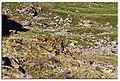 Alamudun, Kyrgyzstan - panoramio (2).jpg