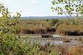 Albufera Parc Natural R13.jpg