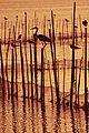 Albufera de valencia, aves autóctonas.jpg