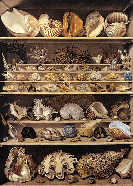 File:Alexandre-Isidore Leroy De Barde - Selection of Shells Arranged on Shelves - WGA12903.jpg