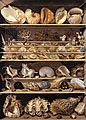 Alexandre-Isidore Leroy De Barde - Selection of Shells Arranged on Shelves - WGA12903.jpg