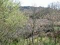 Alfarela de Jales, 5450, Portugal - panoramio - Belarmino Ribeiro (3).jpg