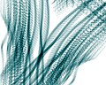 Algal filaments.jpg