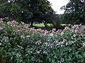 Alien invader in Castle Meadow - geograph.org.uk - 923019.jpg