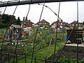 Allotments off Oldfield Lane - geograph.org.uk - 573685.jpg