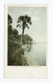 Along Indian River, Rockledge, Fla (NYPL b12647398-62384).tiff