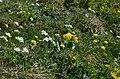 Alpine Biodiversität.jpg